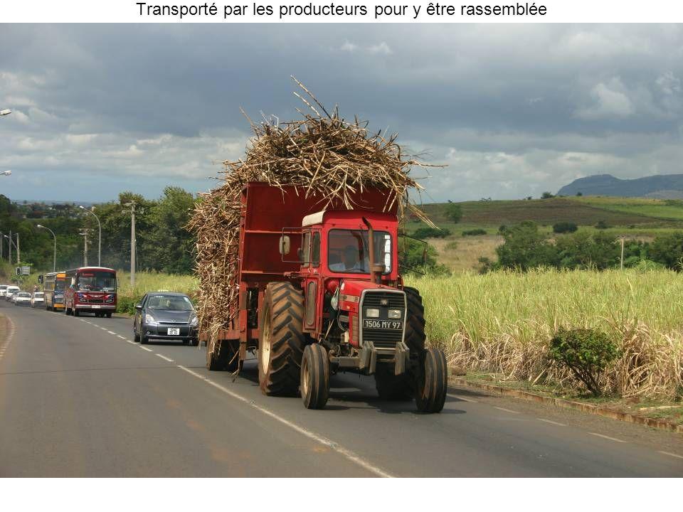 Transporté par les producteurs pour y être rassemblée