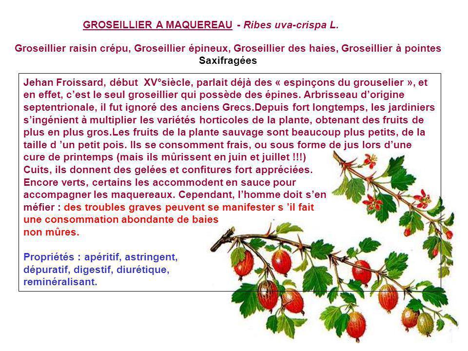 GREMIL- Litbospernum officinale L Daprès la célèbre théorie médici- nale des signatures qui attribuait aux végétaux des vertus saccordant avec leur as