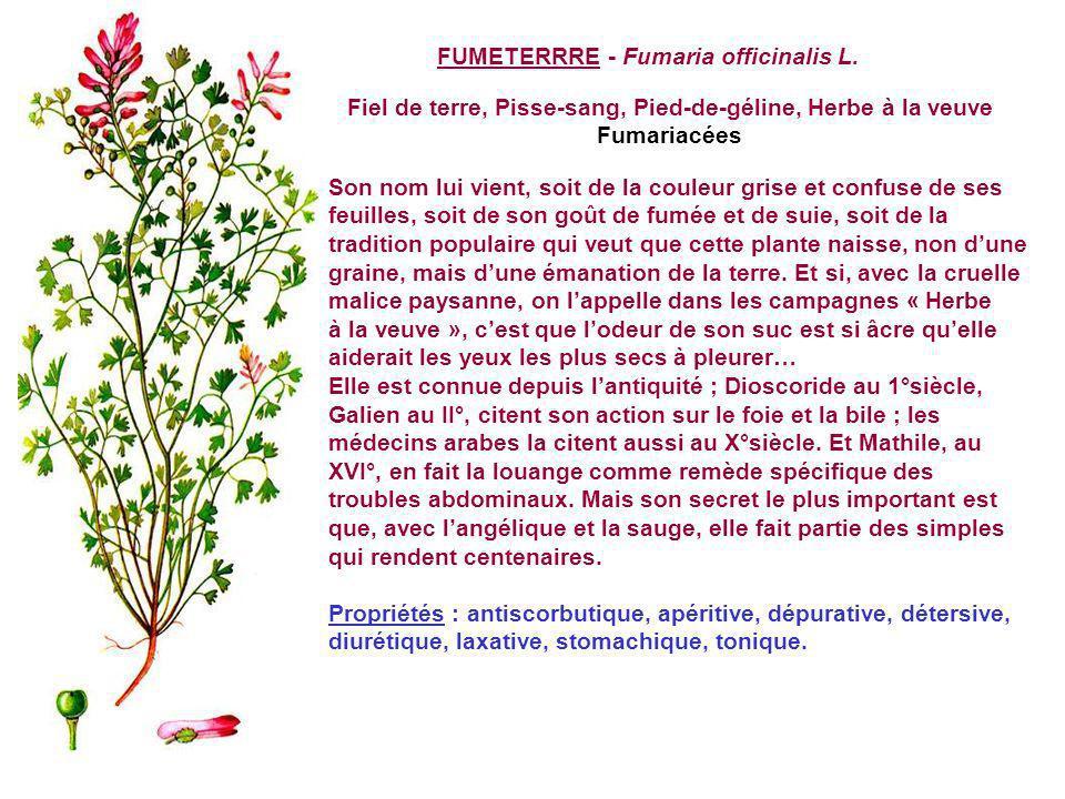 FUMETERRRE - Fumaria officinalis L.