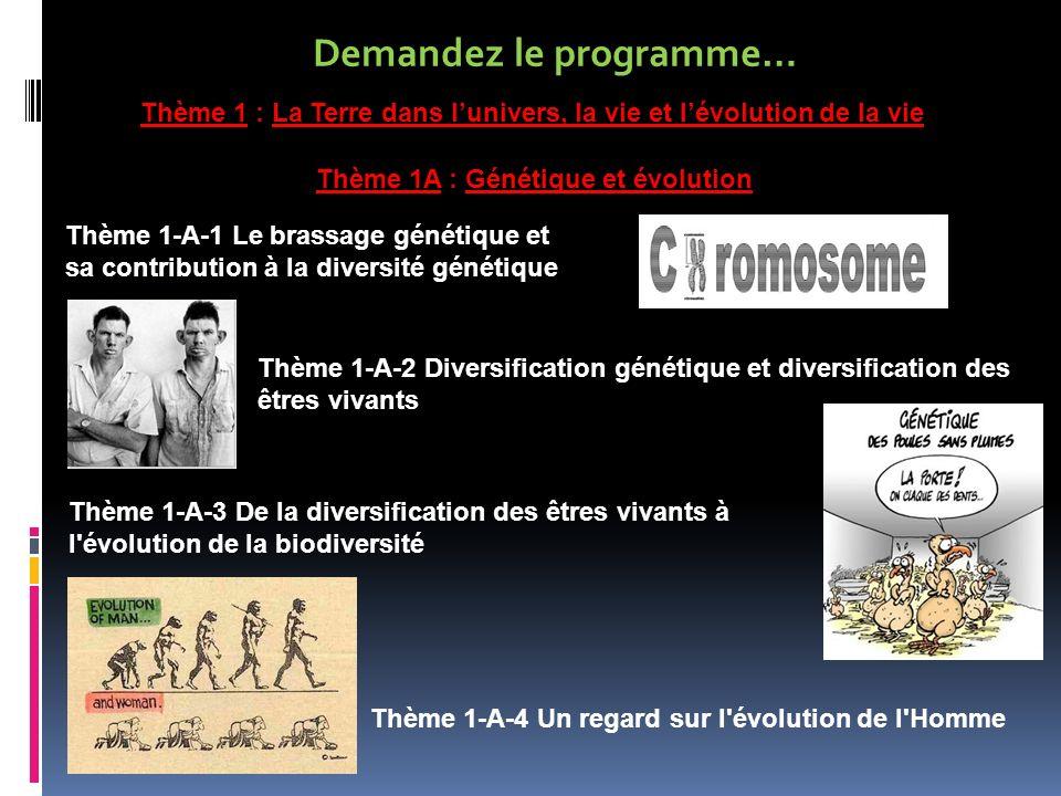 Demandez le programme… Thème 1 : La Terre dans lunivers, la vie et lévolution de la vie Thème 1A : Génétique et évolution Thème 1-A-1 Le brassage géné