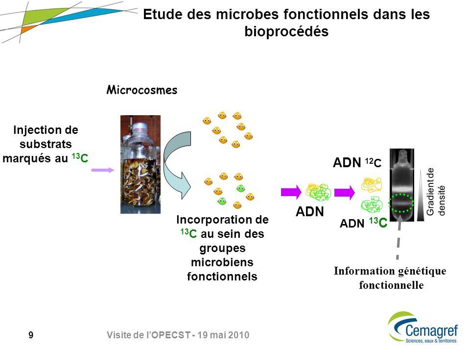 9 Visite de lOPECST - 19 mai 2010 Etude des microbes fonctionnels dans les bioprocédés Microcosmes Incorporation de 13 C au sein des groupes microbiens fonctionnels Injection de substrats marqués au 13 C ADN ADN 12 C Gradient de densité ADN 13 C Information génétique fonctionnelle