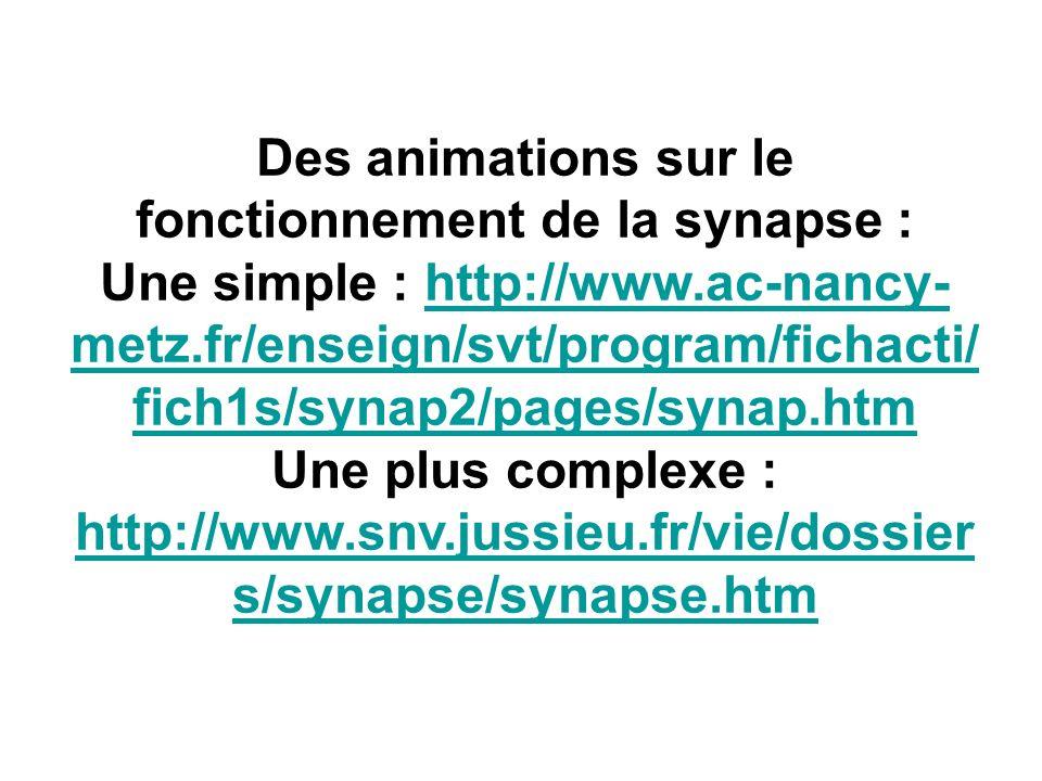 Des animations sur le fonctionnement de la synapse : Une simple : http://www.ac-nancy- metz.fr/enseign/svt/program/fichacti/ fich1s/synap2/pages/synap