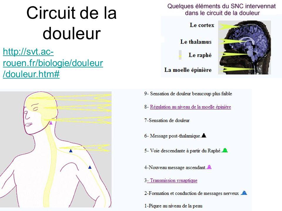 Circuit de la douleur http://svt.ac- rouen.fr/biologie/douleur /douleur.htm#