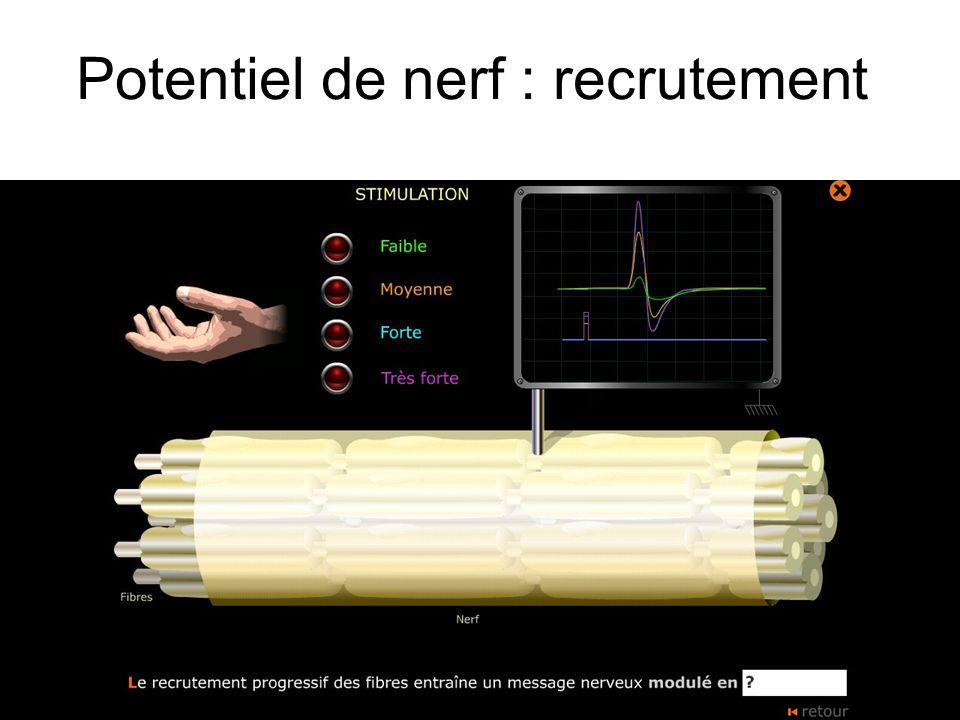 Potentiel de nerf : recrutement
