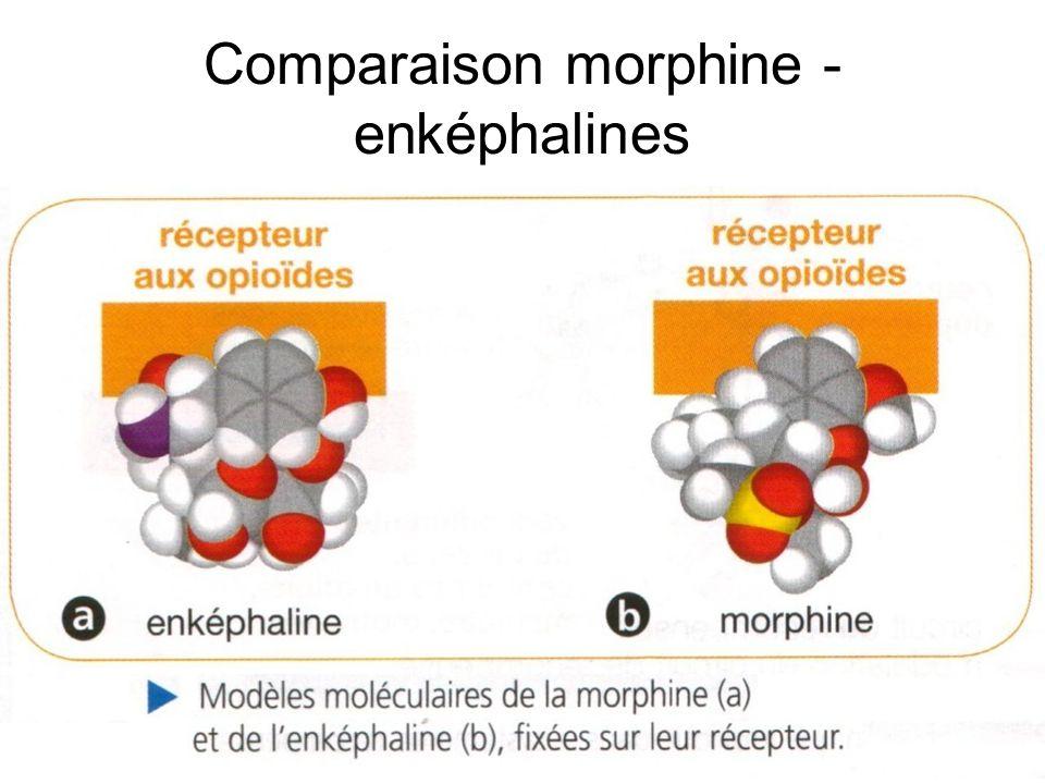 Comparaison morphine - enképhalines
