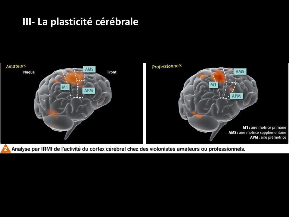 III- La plasticité cérébrale