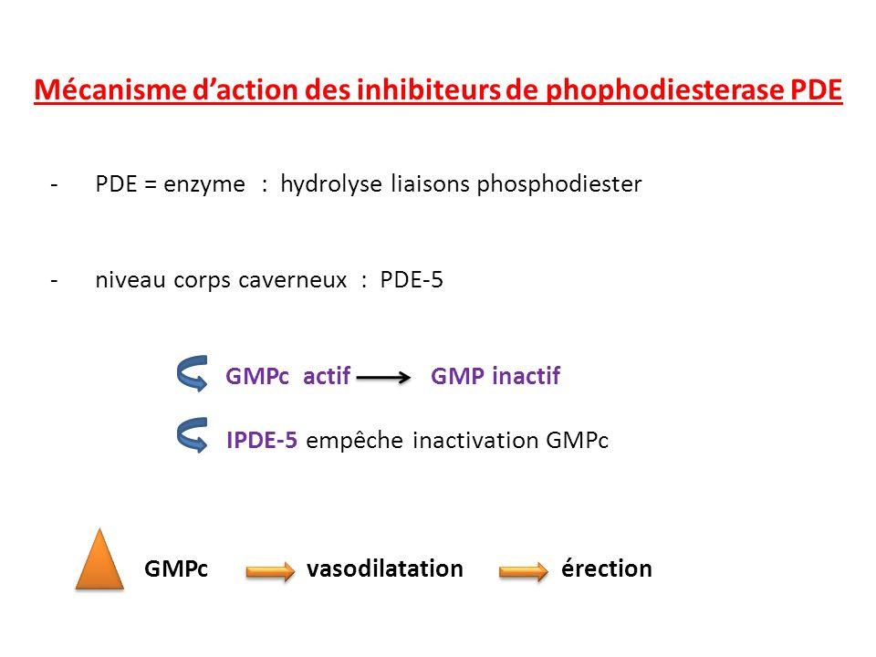- PDE = enzyme : hydrolyse liaisons phosphodiester - niveau corps caverneux : PDE-5 GMPc actif GMP inactif IPDE-5 empêche inactivation GMPc GMPc vasod