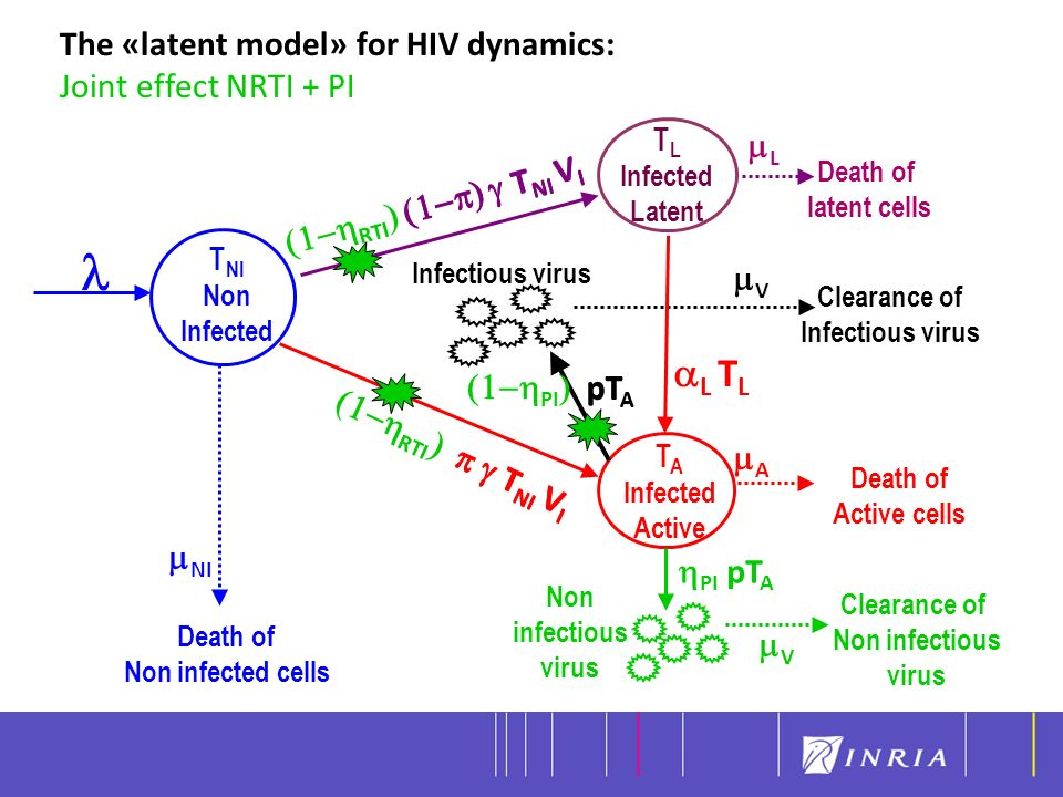 Modèle mathématique pour décrire la dynamique virale de chaque sujet On mesure chez chaque sujet la charge virale totale = (V I + V NI ) le nombre totale de cellule CD4 = (T Q + T NI + T I )