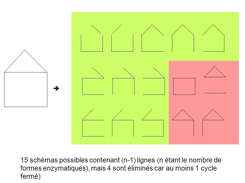 15 schémas possibles contenant (n-1) lignes (n étant le nombre de formes enzymatiques), mais 4 sont éliminés car au moins 1 cycle fermé)