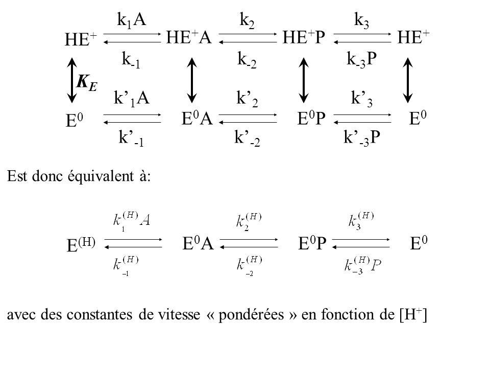 Est donc équivalent à: E (H) E0E0 E0PE0PE0AE0A avec des constantes de vitesse « pondérées » en fonction de [H + ] HE + HE + PHE + A E0E0 E0E0 E0PE0PE0