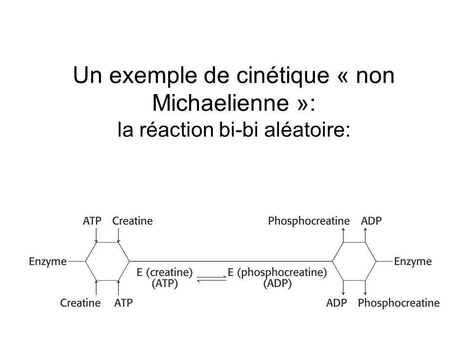 Un exemple de cinétique « non Michaelienne »: la réaction bi-bi aléatoire: