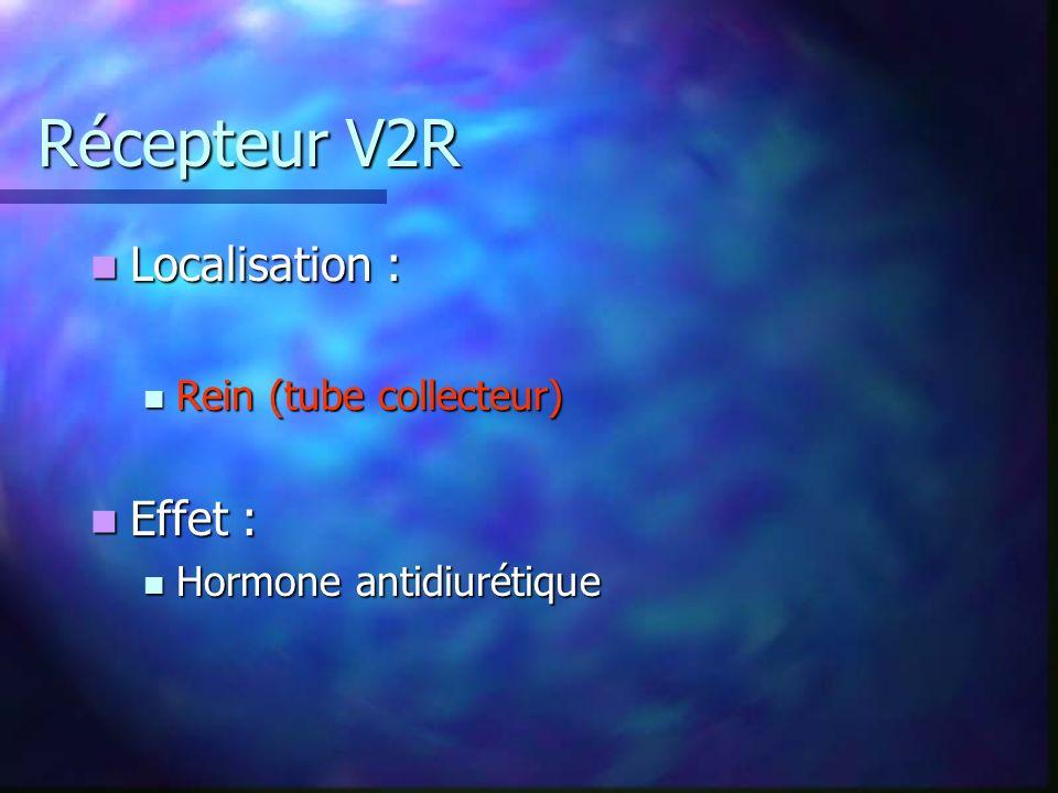 Récepteur V2R Localisation : Localisation : Rein (tube collecteur) Rein (tube collecteur) Effet : Effet : Hormone antidiurétique Hormone antidiurétique