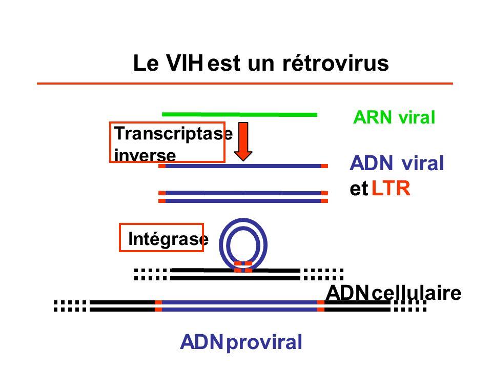 Le VIH est un rétrovirus ARN viral ADN viral etLTR ADN cellulaire Transcriptase inverse (TI ou RT) Intégrase ADN proviral