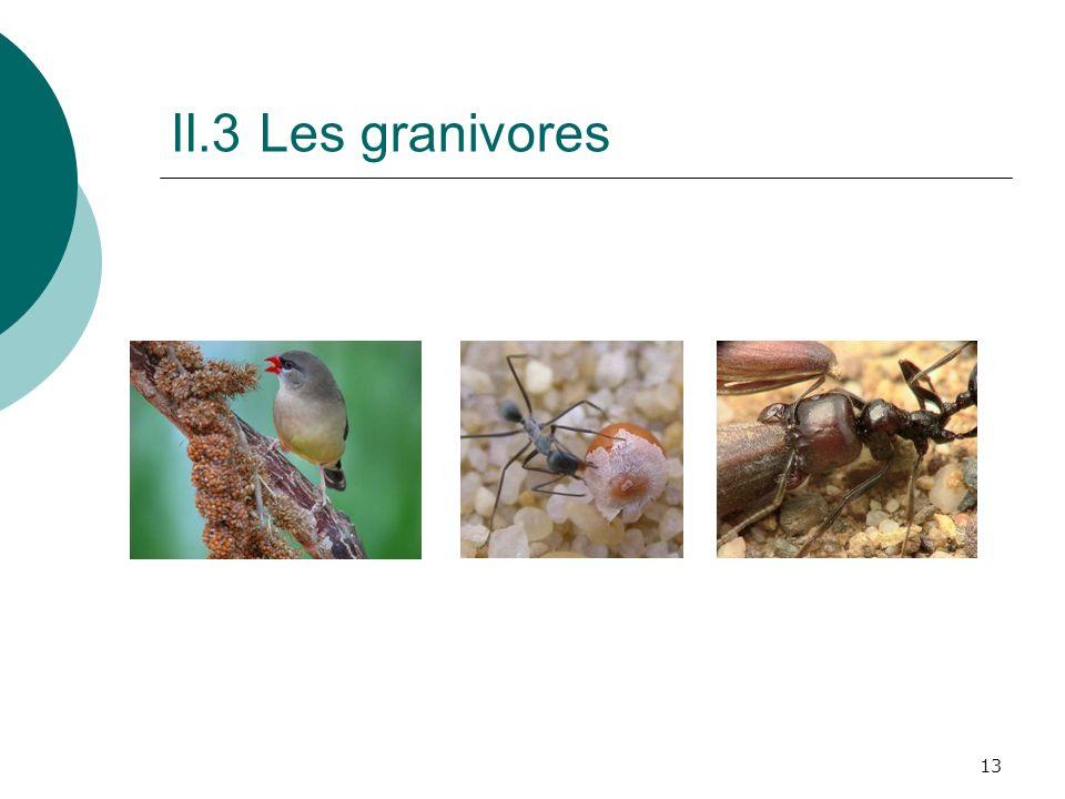 13 II.3 Les granivores