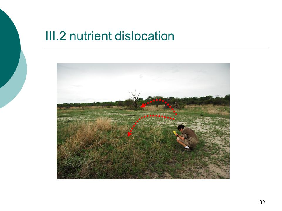 32 III.2 nutrient dislocation
