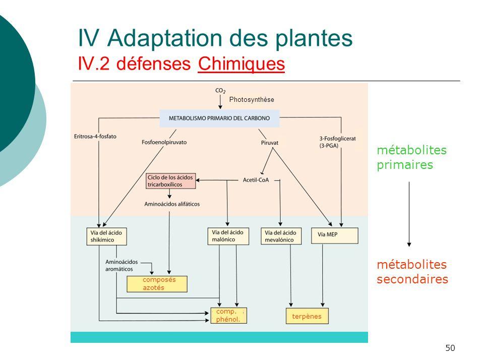 50 Photosynthèse métabolites primaires métabolites secondaires terpènes comp. phénol. composés azotés IV Adaptation des plantes IV.2 défenses Chimique