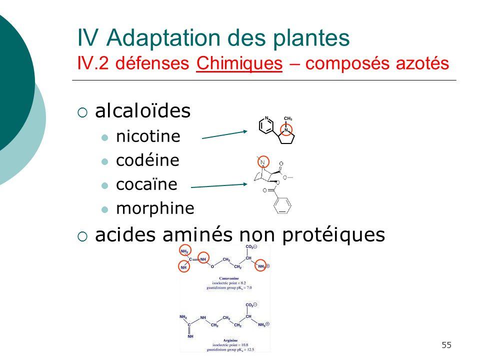 55 IV Adaptation des plantes IV.2 défenses Chimiques – composés azotés alcaloïdes nicotine codéine cocaïne morphine acides aminés non protéiques