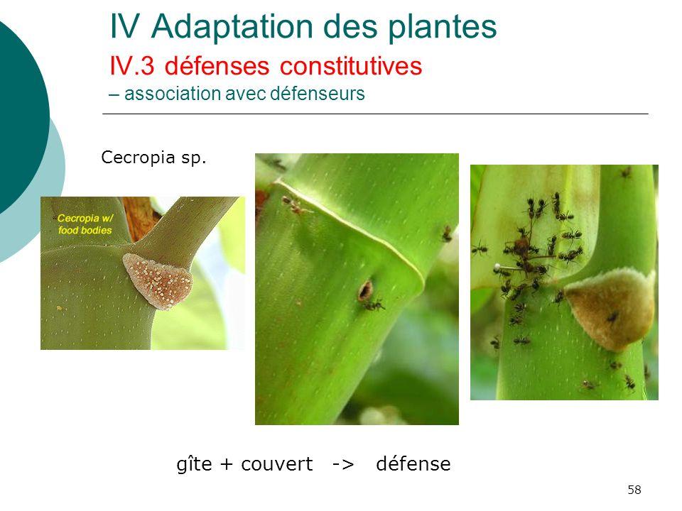 58 IV Adaptation des plantes IV.3 défenses constitutives – association avec défenseurs Cecropia sp. gîte + couvert -> défense