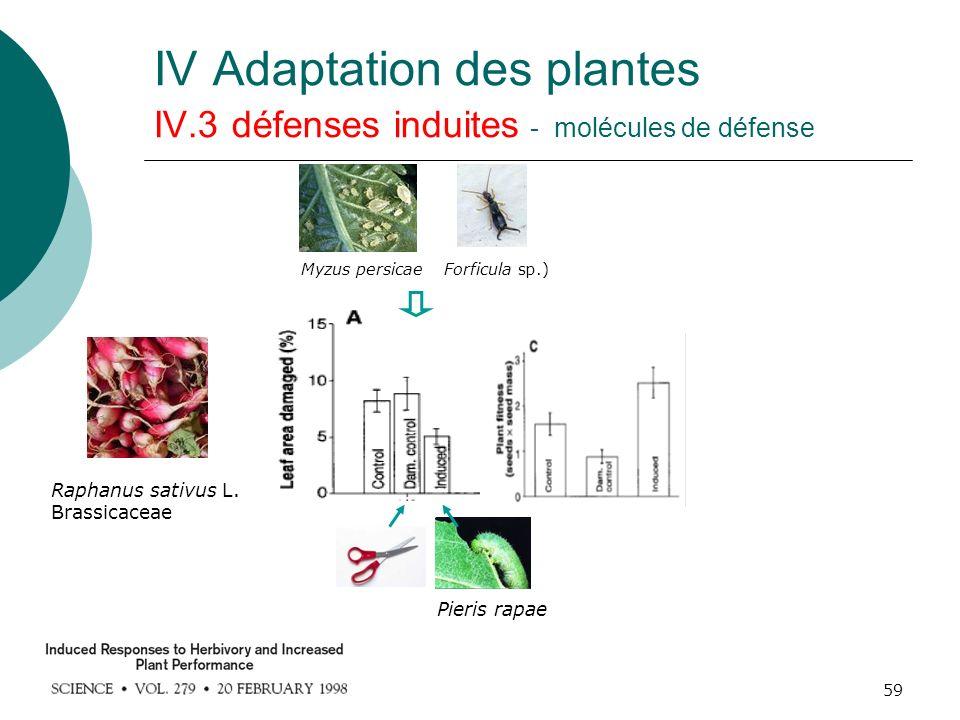 59 IV Adaptation des plantes IV.3 défenses induites - molécules de défense Raphanus sativus L. Brassicaceae Pieris rapae Myzus persicaeForficula sp.)