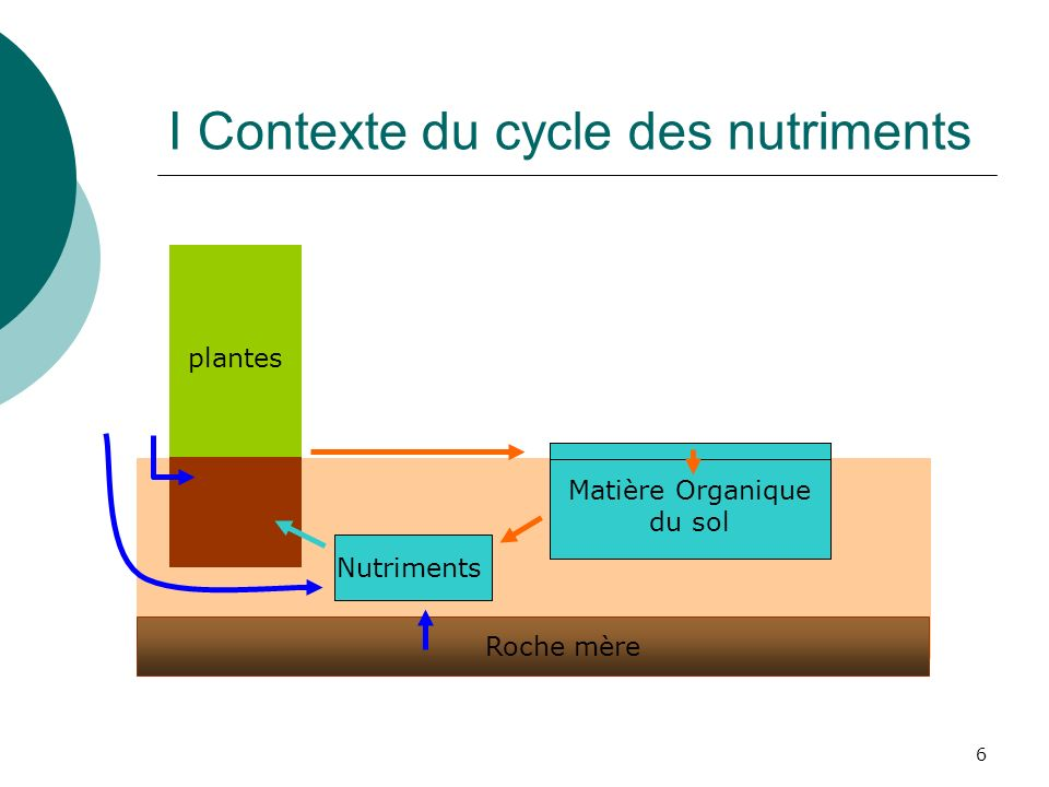 6 I Contexte du cycle des nutriments plantes Matière Organique du sol Roche mère Nutriments