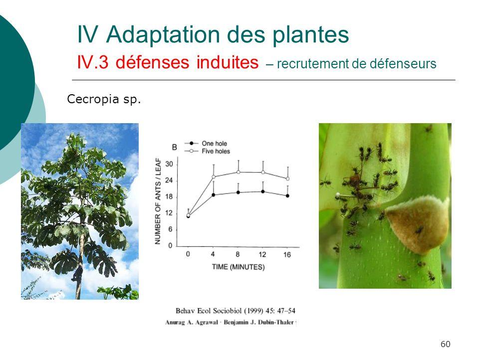 60 IV Adaptation des plantes IV.3 défenses induites – recrutement de défenseurs Cecropia sp.