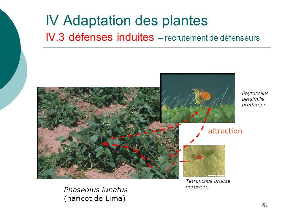 61 IV Adaptation des plantes IV.3 défenses induites – recrutement de défenseurs Tetranchus urticae herbivore Phytoseilus persimilis prédateur attracti