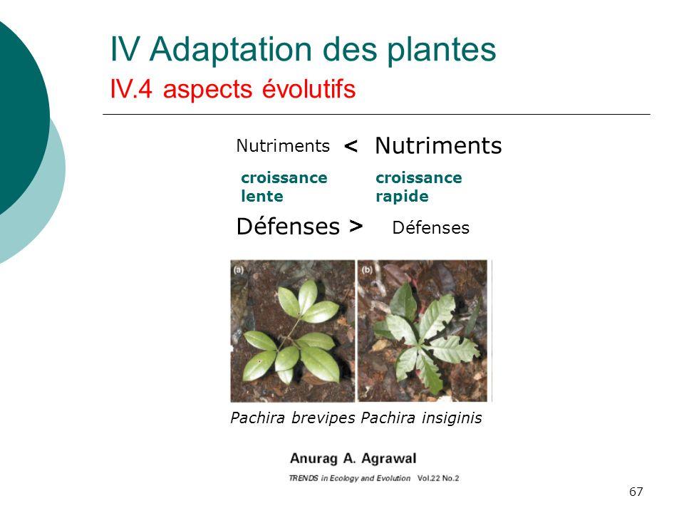 67 Pachira brevipes Pachira insiginis Nutriments < croissance lente croissance rapide Défenses > IV Adaptation des plantes IV.4 aspects évolutifs