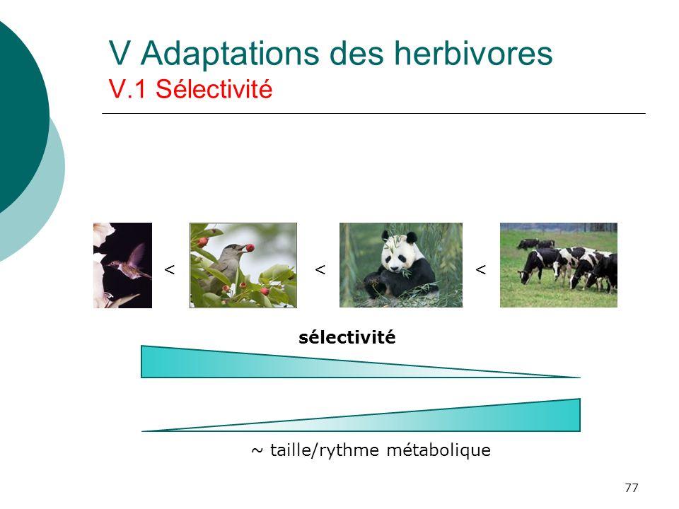 77 V Adaptations des herbivores V.1 Sélectivité < < < ~ taille/rythme métabolique sélectivité