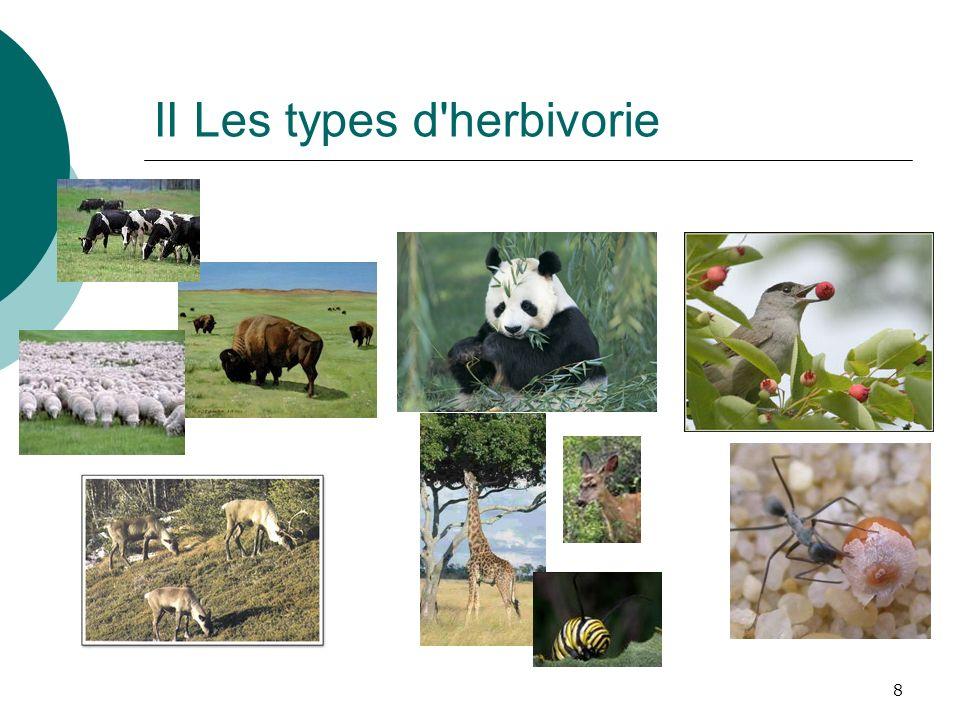 Bilan du cours IContexte du cycle des nutriments II Types d herbivorie IIIConséquences de l herbivorie IVAdaptations des plantes V Contraintes et adaptations des herbivores