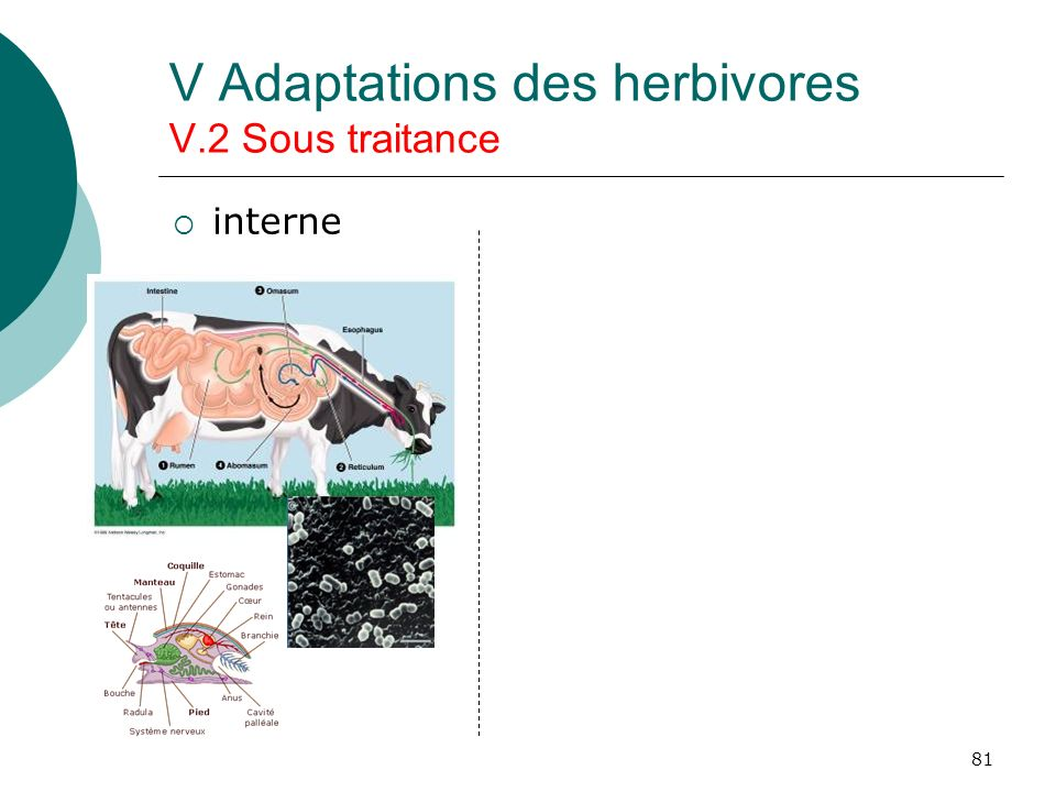 81 V Adaptations des herbivores V.2 Sous traitance interne