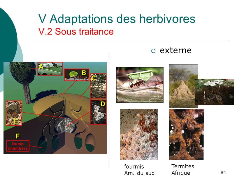 84 V Adaptations des herbivores V.2 Sous traitance externe fourmis Am. du sud Termites Afrique