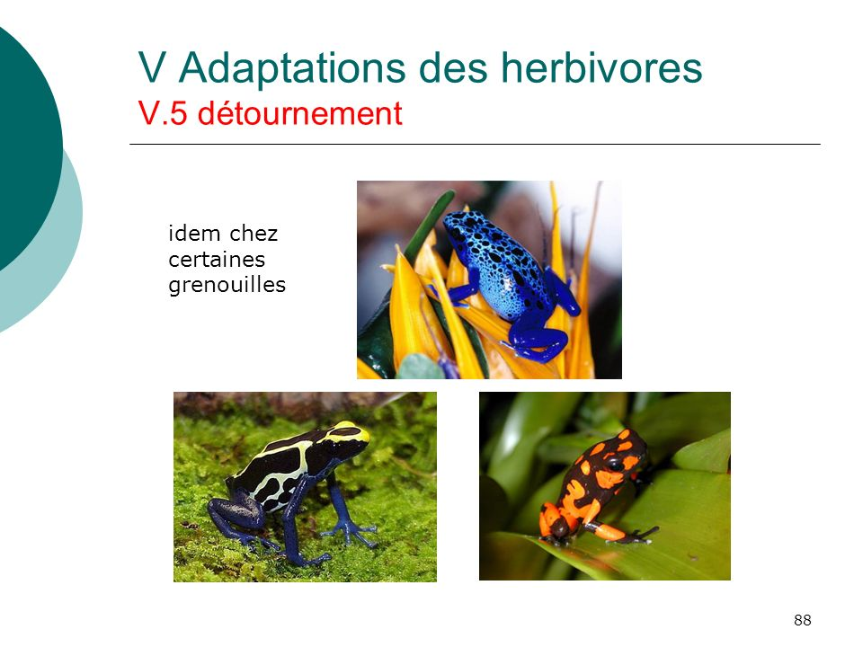 88 V Adaptations des herbivores V.5 détournement idem chez certaines grenouilles
