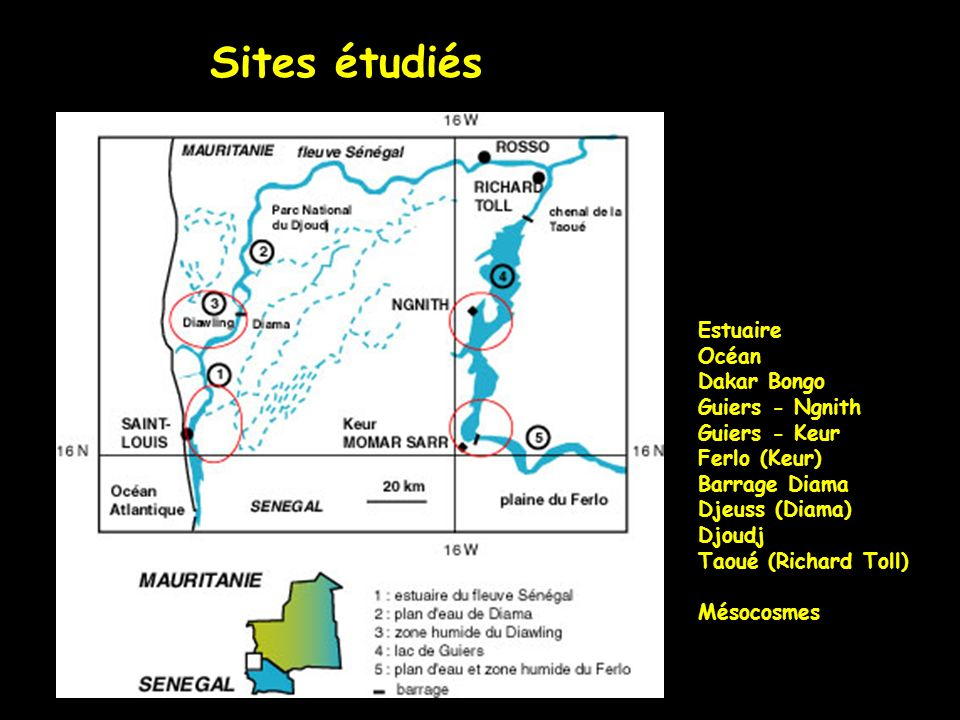 Sites étudiés Estuaire Océan Dakar Bongo Guiers - Ngnith Guiers - Keur Ferlo (Keur) Barrage Diama Djeuss (Diama) Djoudj Taoué (Richard Toll) Mésocosme