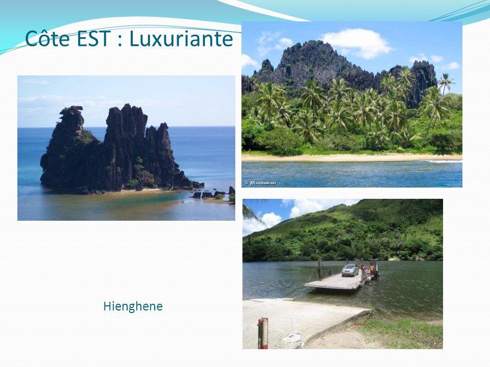 Côte EST : Luxuriante