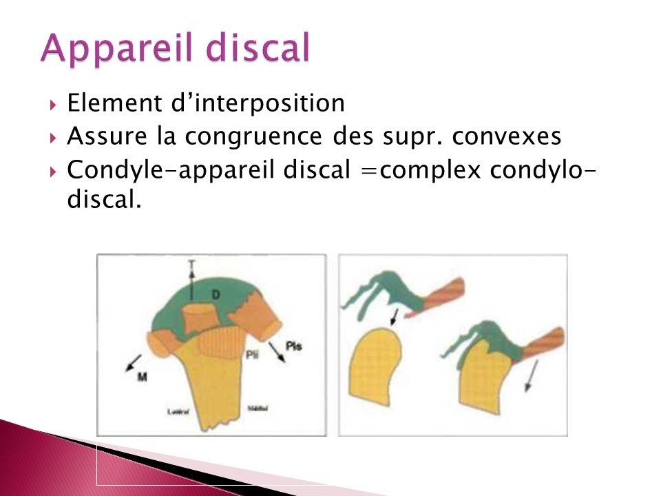 Element dinterposition Assure la congruence des supr. convexes Condyle-appareil discal =complex condylo- discal.