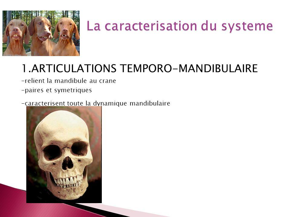 1.ARTICULATIONS TEMPORO-MANDIBULAIRE -relient la mandibule au crane -paires et symetriques -caracterisent toute la dynamique mandibulaire