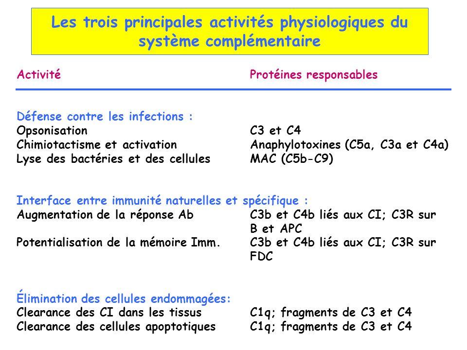 Les trois principales activités physiologiques du système complémentaire ActivitéProtéines responsables Défense contre les infections : OpsonisationC3