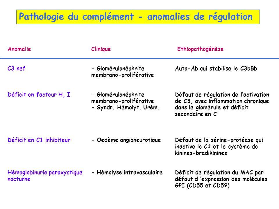AnomalieClinique Ethiopathogénèse C3 nef- Glomérulonéphrite Auto-Ab qui stabilise le C3bBb membrano-proliférative Déficit en facteur H, I- Gloméruloné