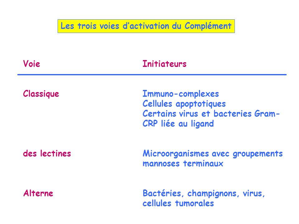 VoieInitiateurs ClassiqueImmuno-complexes Cellules apoptotiques Certains virus et bacteries Gram- CRP liée au ligand des lectinesMicroorganismes avec