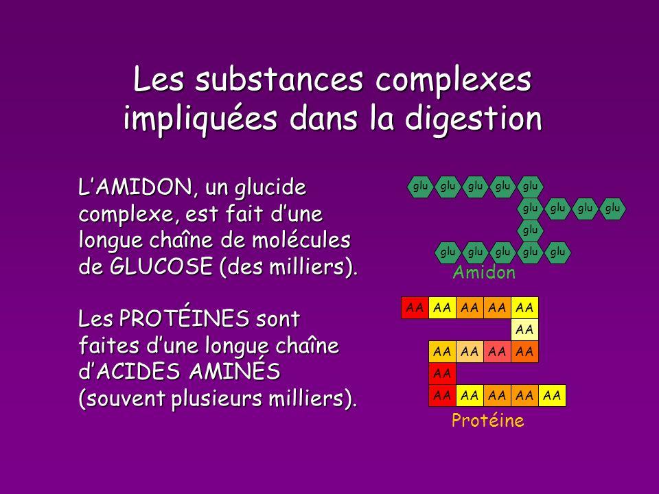 Les substances complexes impliquées dans la digestion LAMIDON, un glucide complexe, est fait dune longue chaîne de molécules de GLUCOSE (des milliers).