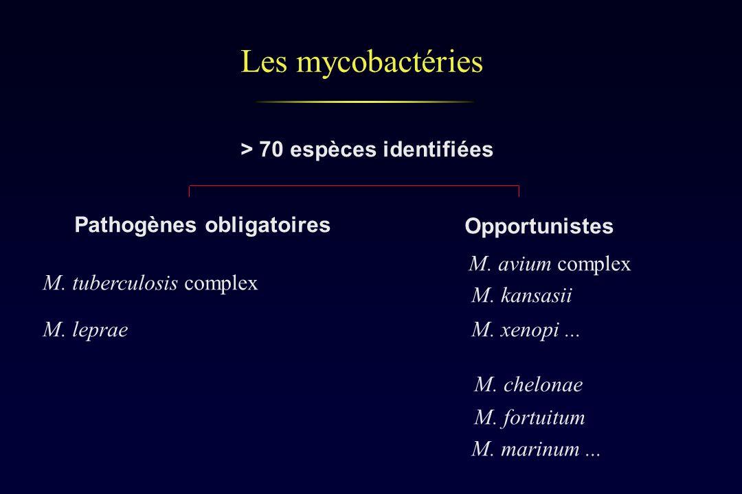 Les mycobactéries > 70 espèces identifiées Pathogènes obligatoires Opportunistes M. tuberculosis complex M. leprae M. avium complex M. kansasii M. xen