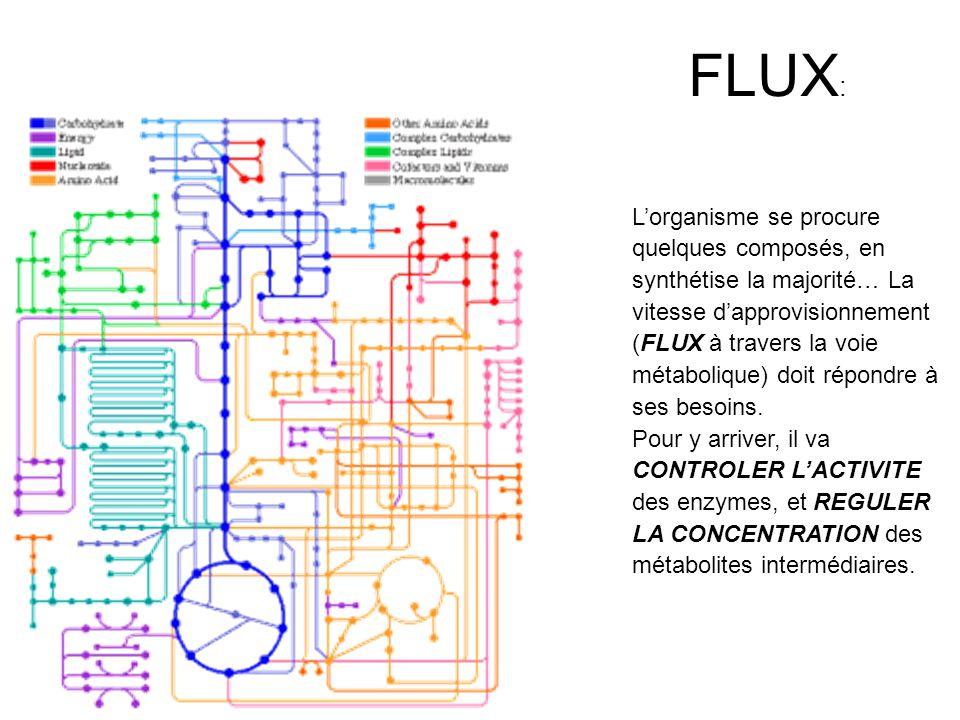 Flux, contrôle et régulation: « Flux » : vitesse de production (et dutilisation) des différents métabolites dont lorganisme a besoin.