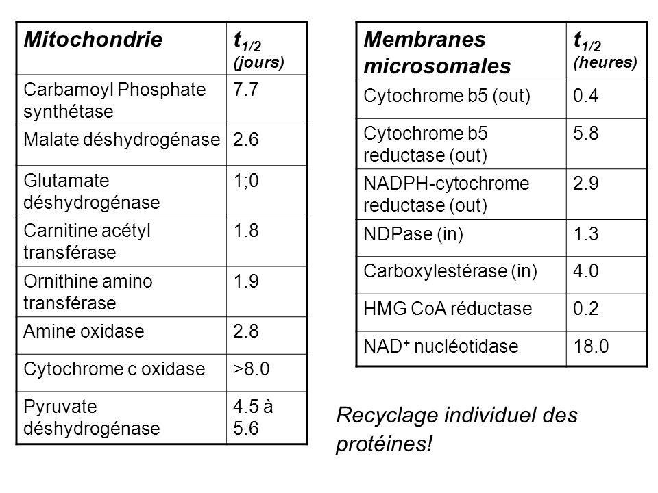 Contrôle de la synthèse et de la dégradation: Transcription Stabilité de lARNm (séquences « UA riche », etc) Traduction Dégradation de la protéine (séquences « PEST », ubiquitinylation, SUMOylation, mais aussi protéolyse régulée de la HMG CoA réductase, « down-regulation » des récepteurs, etc.) Souvent: régulation coordonnée de toute la voie