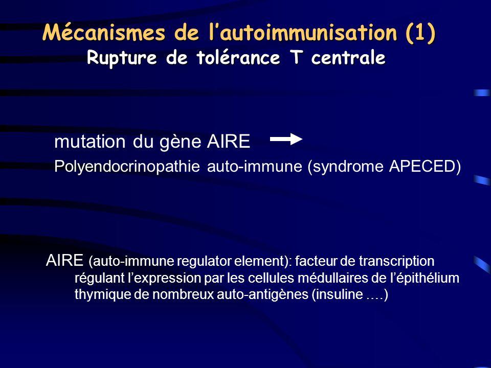 Mécanismes de lautoimmunisation (1) Rupture de tolérance T centrale mutation du gène AIRE Polyendocrinopathie auto-immune (syndrome APECED) AIRE (auto