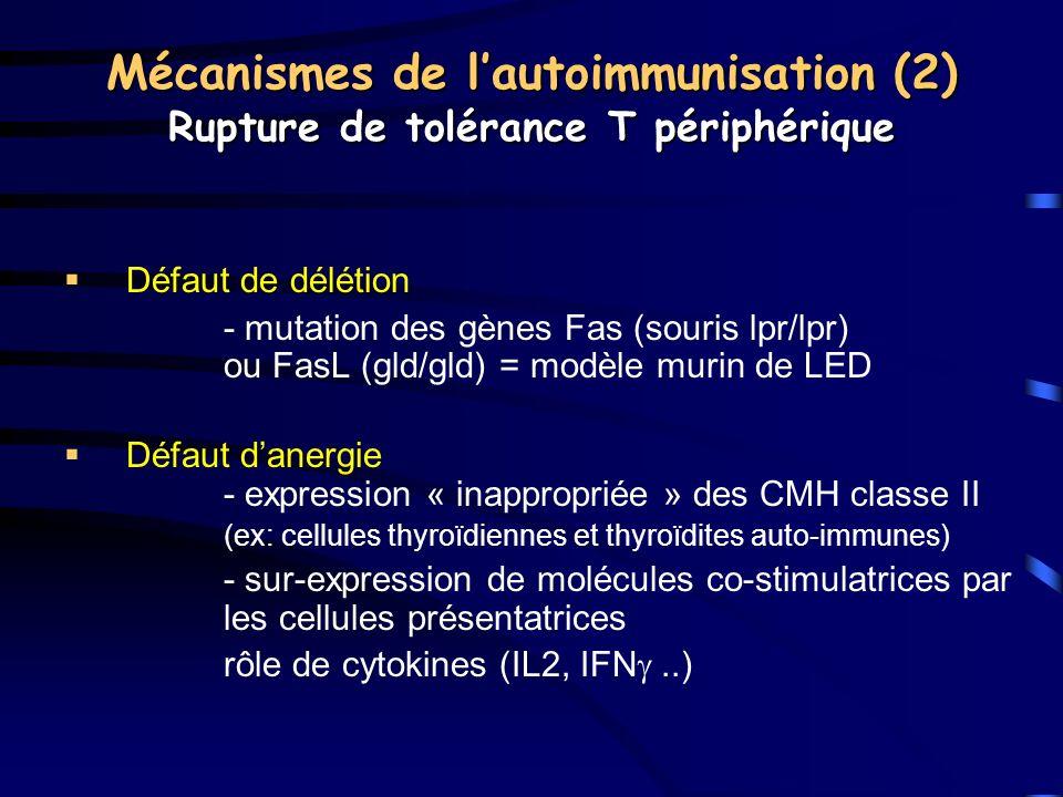 Mécanismes de lautoimmunisation (2) Rupture de tolérance T périphérique Défaut de délétion - mutation des gènes Fas (souris lpr/lpr) ou FasL (gld/gld)