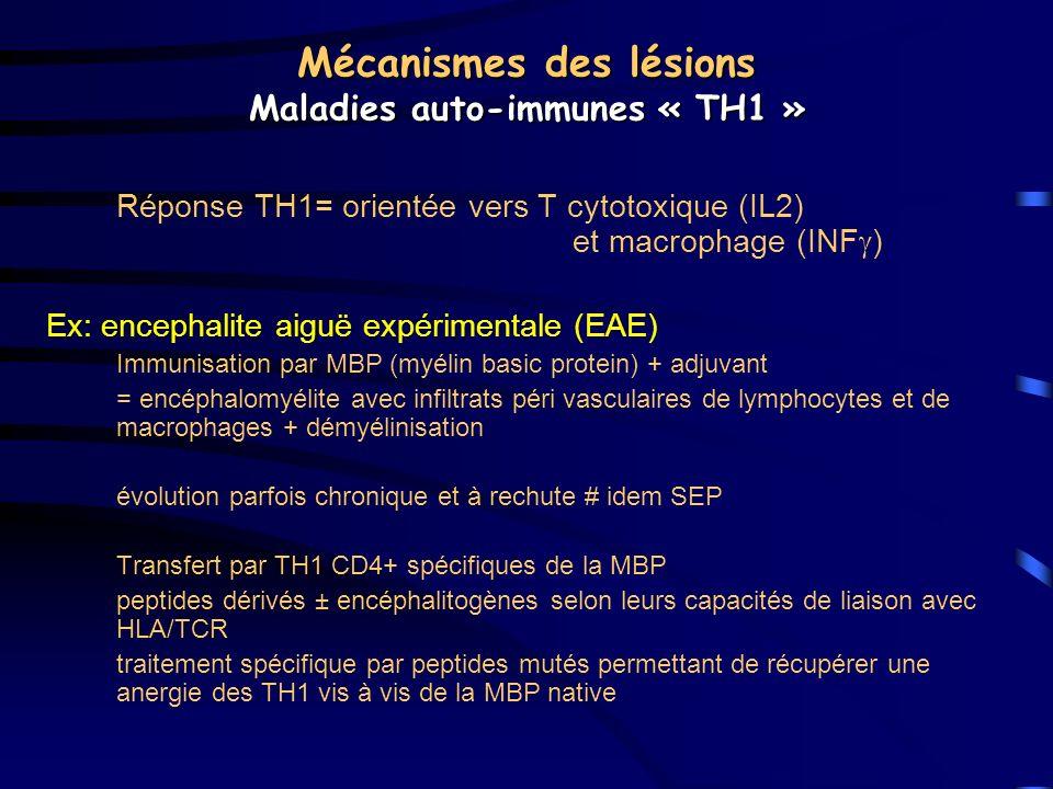 Mécanismes des lésions Maladies auto-immunes « TH1 » Réponse TH1= orientée vers T cytotoxique (IL2) et macrophage (INF ) Ex: encephalite aiguë expérim