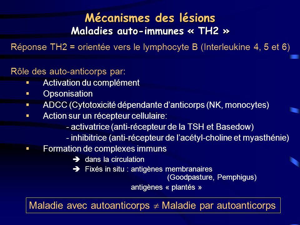 Mécanismes des lésions Maladies auto-immunes « TH2 » Réponse TH2 = orientée vers le lymphocyte B (Interleukine 4, 5 et 6) Rôle des auto-anticorps par: