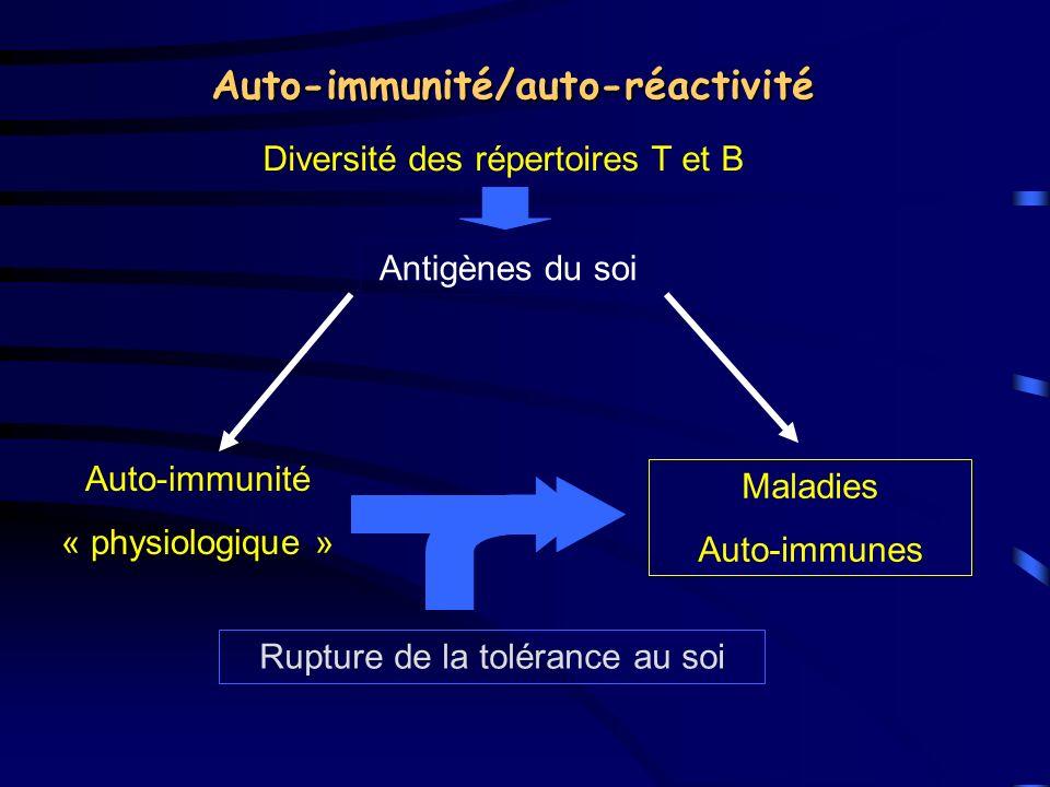 Tolérance T-dépendante Délétion ThymusPériphérie Ignorance Délétion Anergie Suppression Lymphocytes T auto-réactif Cellules présentatrices Lymphocytes B auto-réactif Maladies auto- immunes + +
