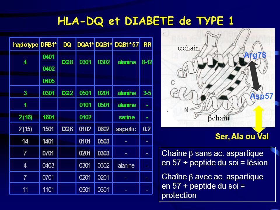 HLA-DQ et DIABETE de TYPE 1 Asp57 Arg78 Ser, Ala ou Val chain Chaîne sans ac. aspartique en 57 + peptide du soi = lésion Chaîne avec ac. aspartique en