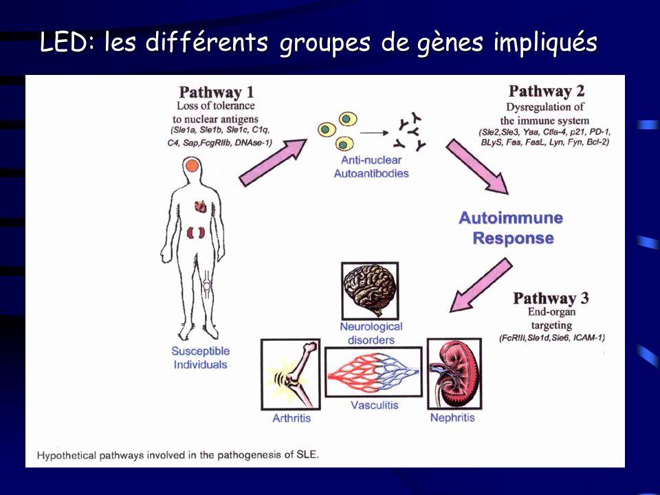 LED: les différents groupes de gènes impliqués